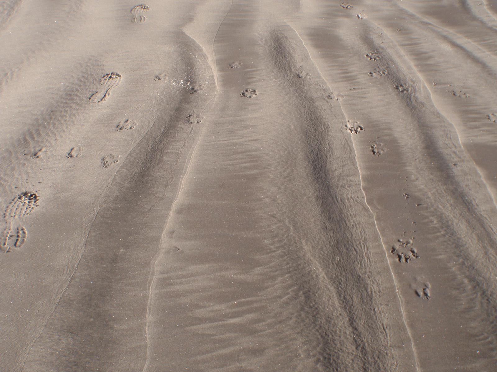 Footsteps, Fort Stevens, Astoria OR